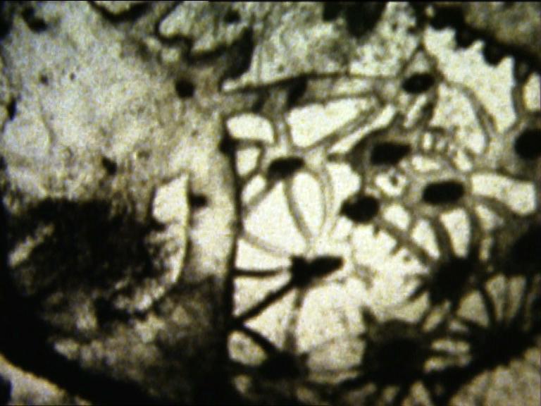 imagen super8 exposición lolica filmotive iñaki sagastume